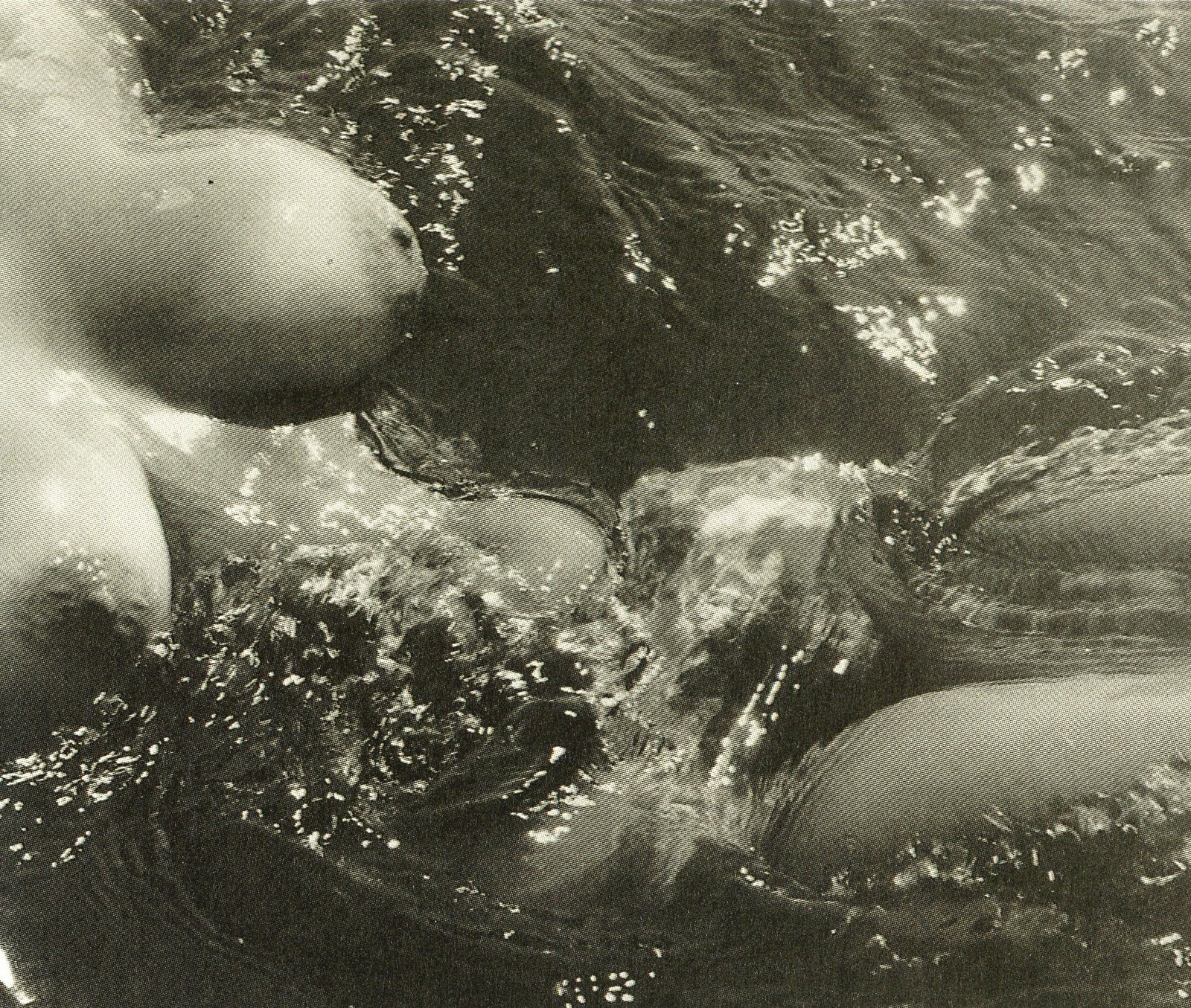 """NUDES OF THE SEA"", : LUCIEN CLERGUE, 1975"
