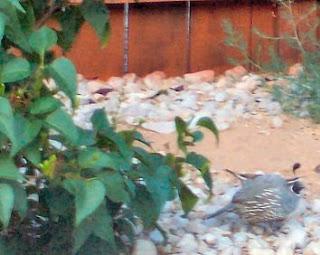 The quail.