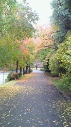 近所の散歩道