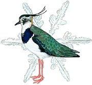 Atlas de aves invernantes