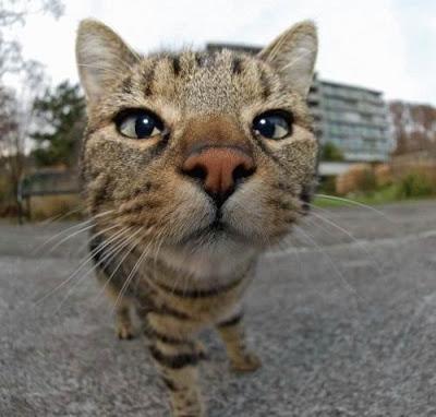 La curiosidad del gato