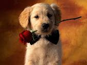 Perrito Romantico