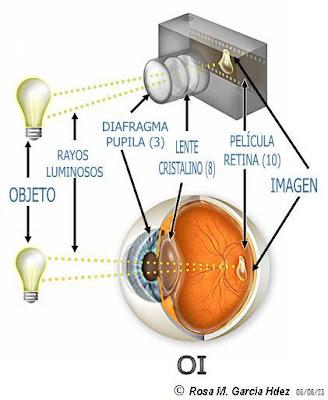 Explorando el Mundo de la Visión: Un poquito de anatomía ocular ...