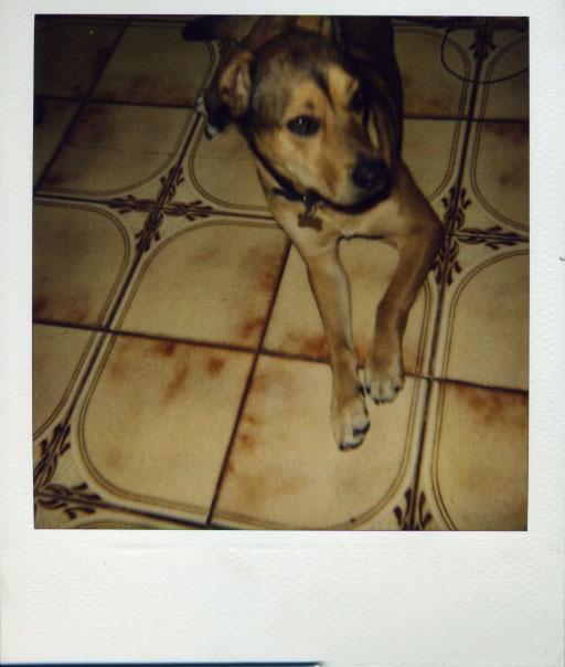 [puppy]