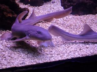 bb tubarão sorrindo...