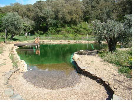 Esta o terra piscinas ecol gicas for Albercas ecologicas