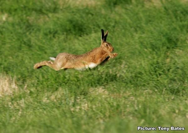 [hare018]
