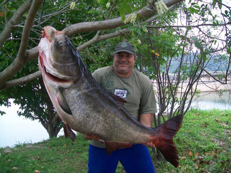 Amigos e pescadores carpa cabe uda gigante fisgada na for Carpa de rio