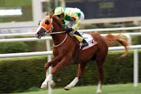 2008 malazgirt koşusunu kazanan Ayabakan jokeyi halis karataş ile