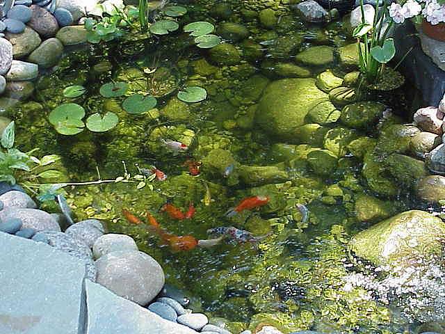 Mundo de las flores jardiner a c mo construir un estanque for Estanque de concreto