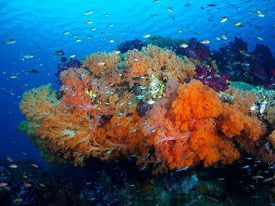 http://3.bp.blogspot.com/_6tQZjP4fLFk/S35dN1KT__I/AAAAAAAADGA/ouHtefjtwwY/s400/coral-raja-ampat.jpg