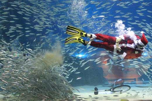 Papa Noel Seul bajo el mar