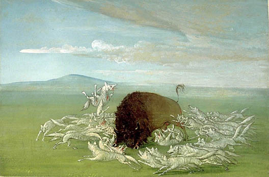 It's a vivid depiction of the brutal relations among bison, wolves,