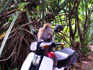 monkeys scooter