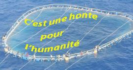 Des immigrants accrochés à des cages d'élevage de thon,