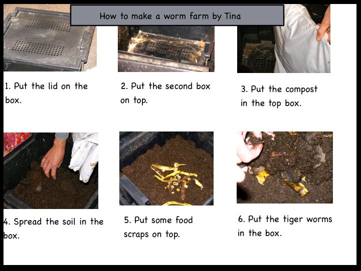 Kaipara Flats Room 2 News: Our Worm Farm