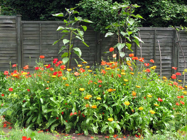 Poppies, marigolds and sunflowers.