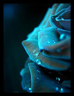 Glow_II_by_Darkrose42-a sOoL!!