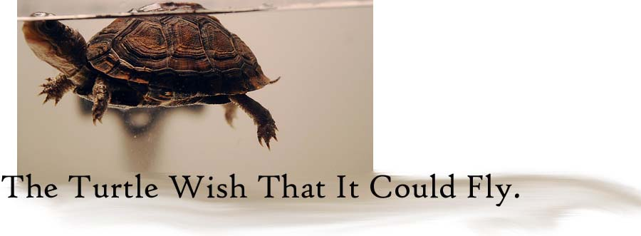 the turtle wish that it could fly