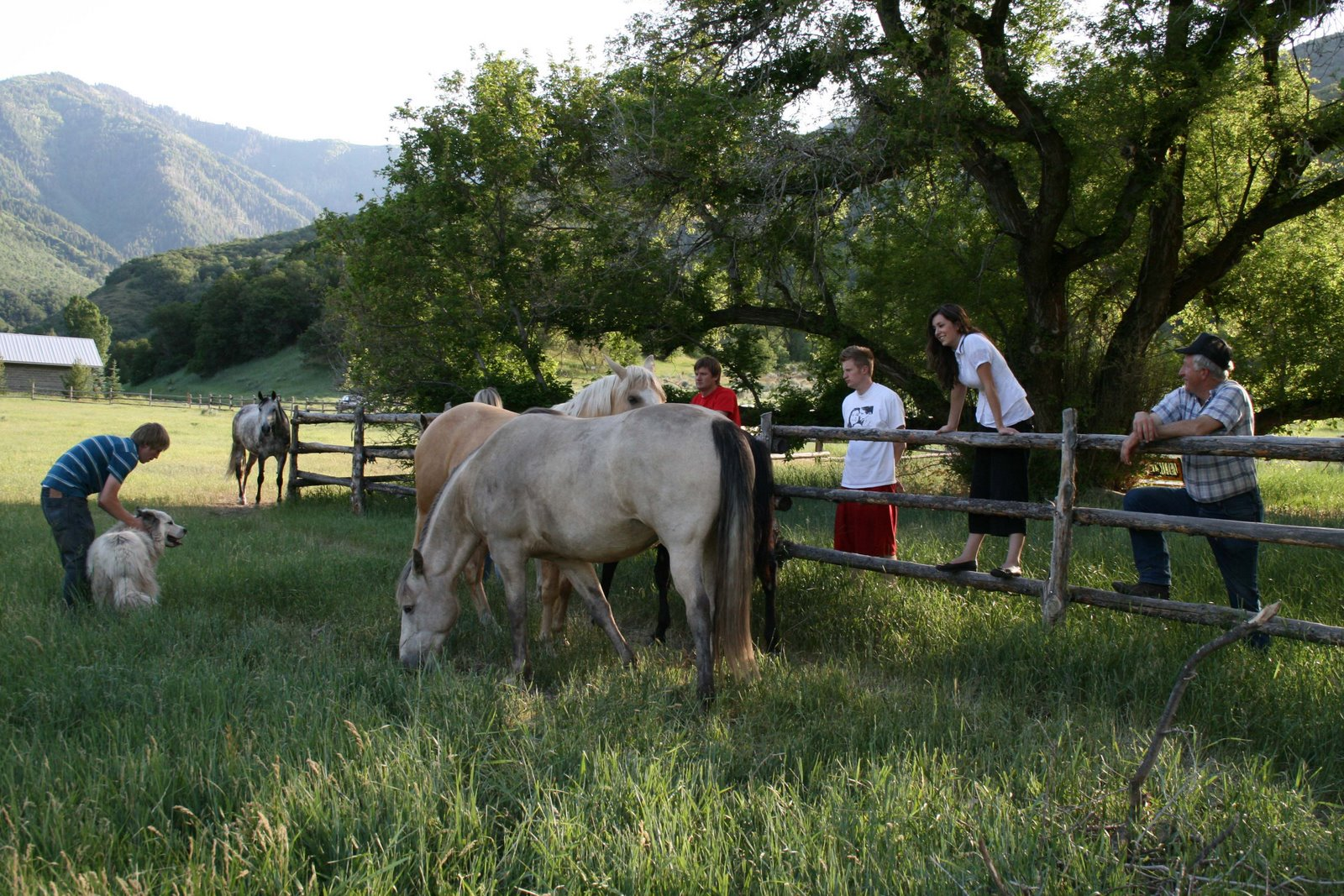 [Family+visiting+horses]