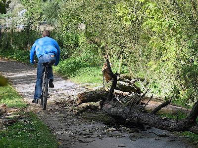 Rowrzysta omija powalone drzewo