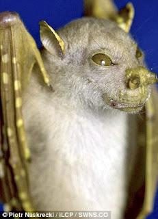 Les animaux les plus étranges Morcego