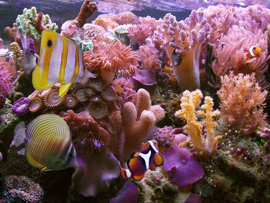 http://3.bp.blogspot.com/_70JElYVm91Q/TJIaLPkewMI/AAAAAAAAIN8/FOCRsc8a1Gk/s1600/coral-reef-2401.jpg