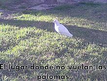 El Lugar Donde No Vuelan Las Palomas by Angela Lacruz Soro ^^