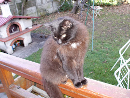 la mia gatta preferita: Neria
