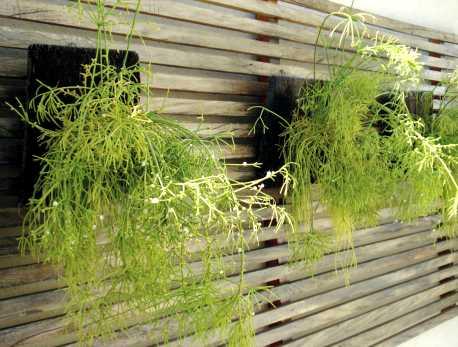 Plantas para jardins pequenos externos