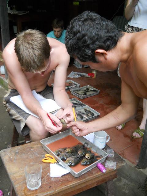 fish research Nicaragua