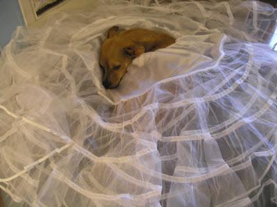 Petticoat Husband