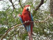 O Pássaro e a Oração.