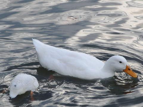 capodimonte, lago di bolsena