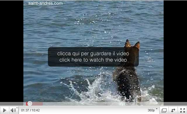 dogs, cani, slow motion video, rallentatore