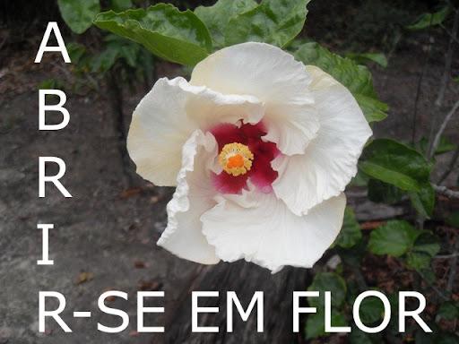 Abrir-se em flor