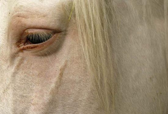 Cavallo malinconico