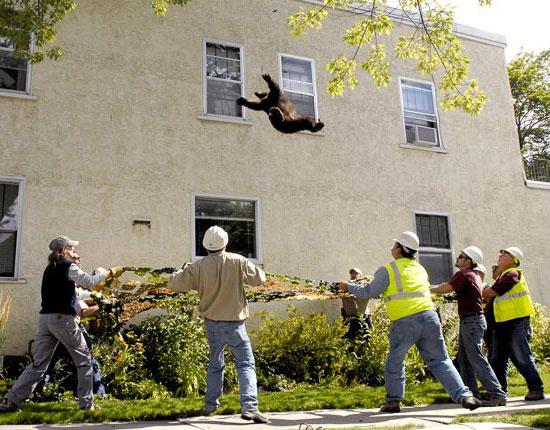 Orso suicida