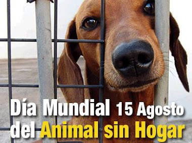 Día del Animal Sin Hogar