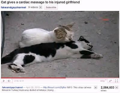 Youtube Cat Massage