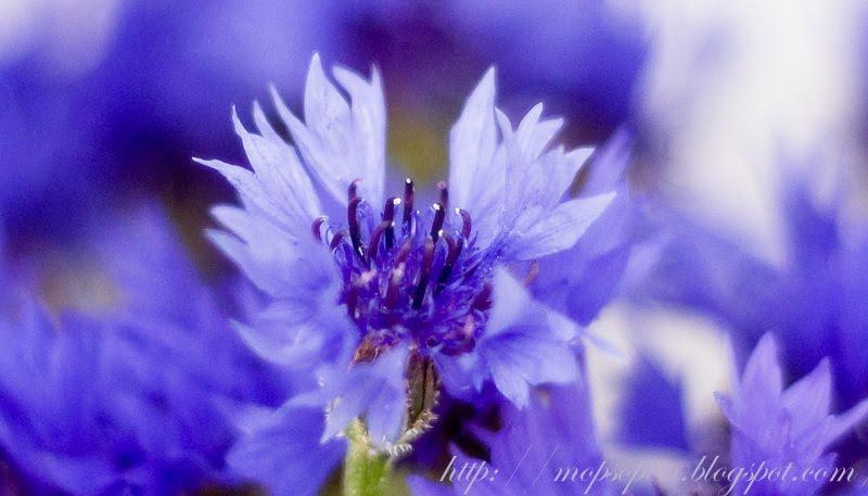 А самые красивые летние цветы