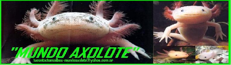 """MUNDO AXOLOTE"""