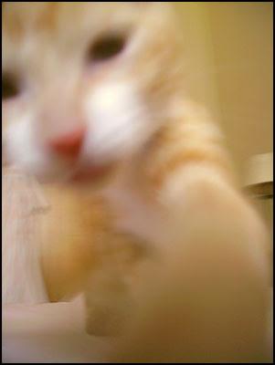 gato Tobias