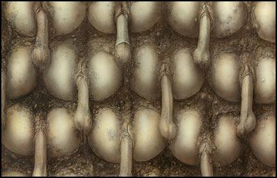 Landschaft XX - H. R. Giger