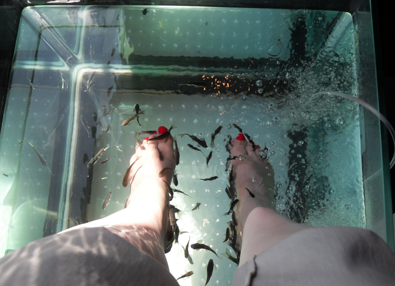 fish pedicure locations in new jersey joy studio design