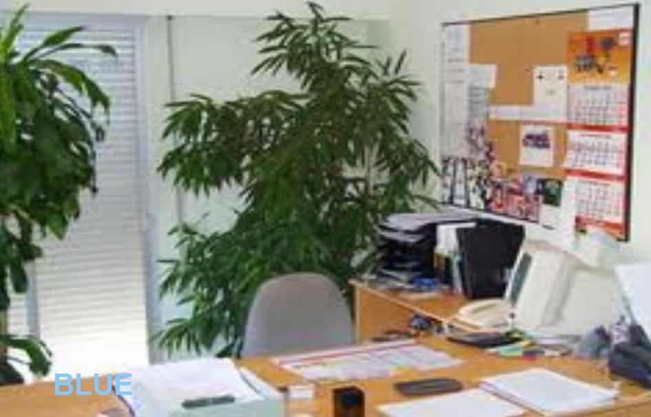C mo cuidar una planta de interior en la oficina for Plantas decorativas para oficina