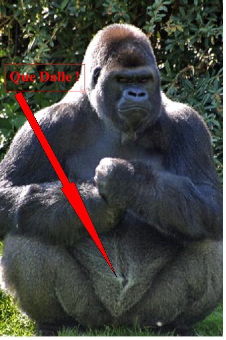 Photos de sexe de gorille