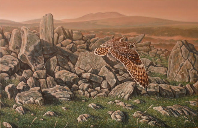 Among the Ruins - Short Eared Owl