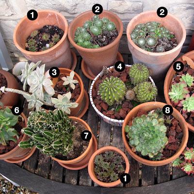 Pintando plantas el jard n del cactus y suculentas no for Cactaceas y suculentas