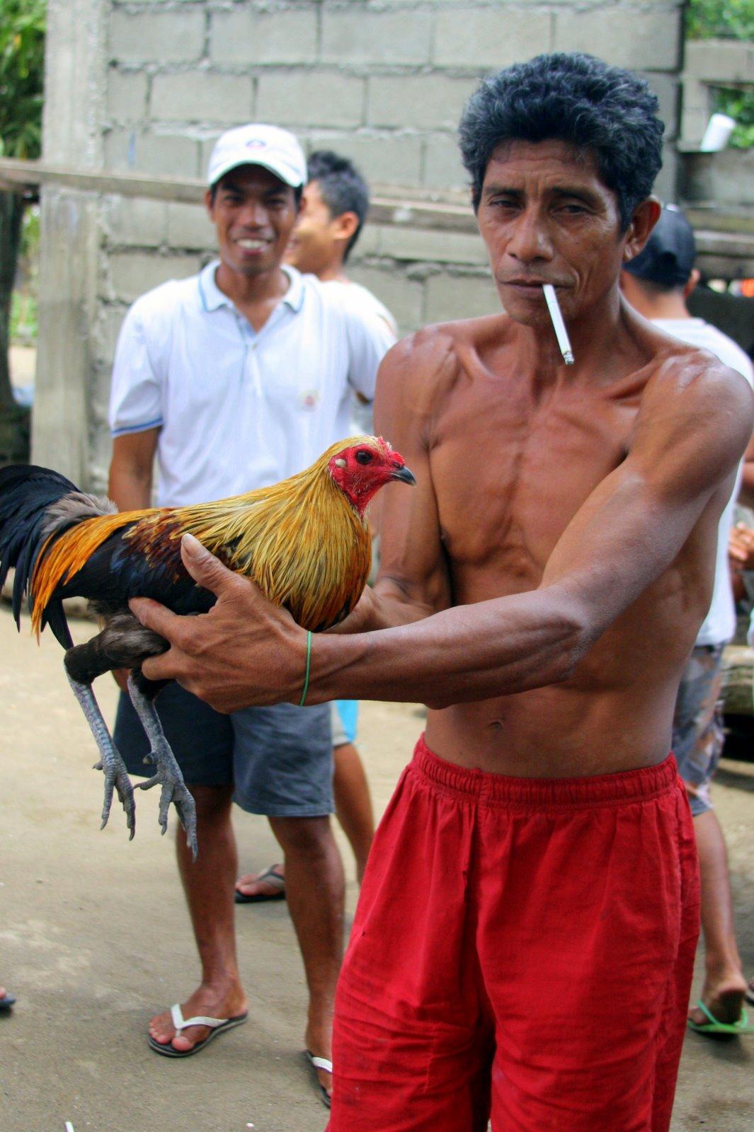 cara mengobati penyakit korep pada ayam ayam bangkok mania